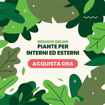 vivaio cecchini negozio online piante per interno ed esterno