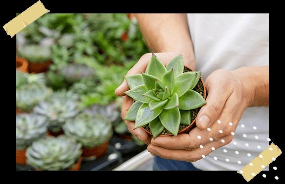 coltivazione e commercializzazione di piante e fiori nel vivaio cecchini a lodi