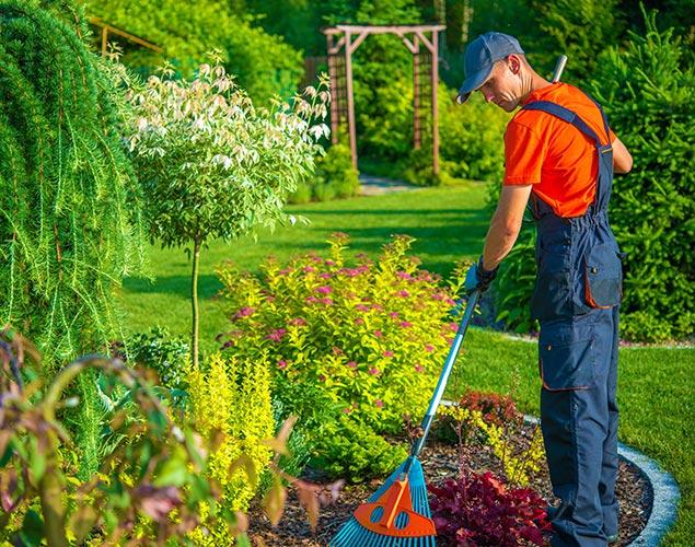 servizio di manutenzione del verde di vivaio cecchini