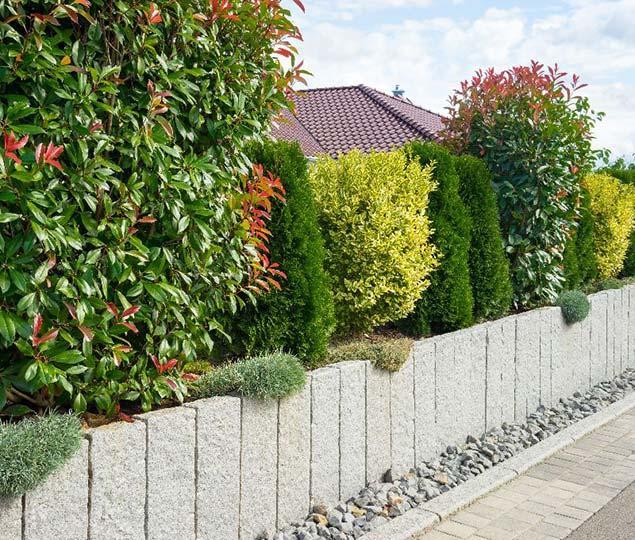 servizio piantumazione di siepi e altre piante arboree vivaio cecchini