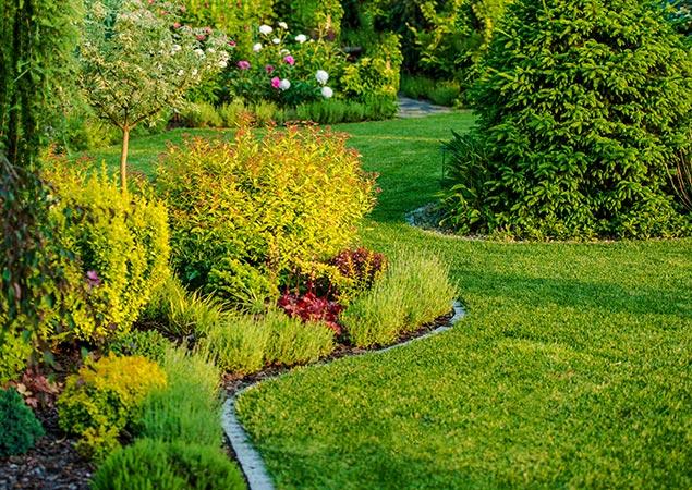 servizio di progettazione aree verdi vivaio cecchini