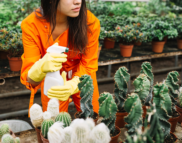 trattamento antiparassitari e zanzare vivaio cecchini